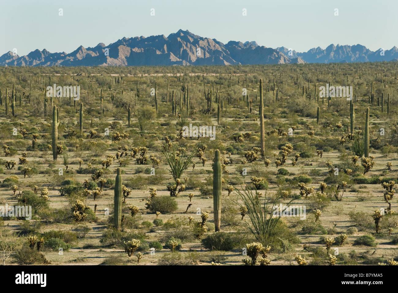 Sonoran Desert, Tinajas Altas Mountains, Barry Goldwater Air Force Range,  Arizona - Stock Image