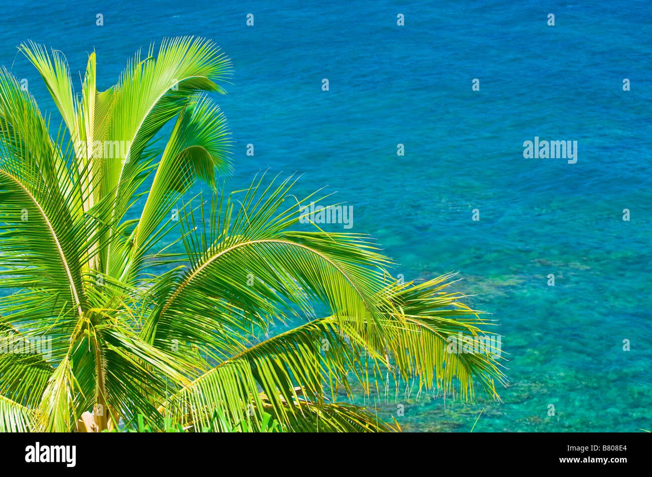 Coconut palm and blue Pacific water at Hideaways Beach Island of Kauai Hawaii - Stock Image