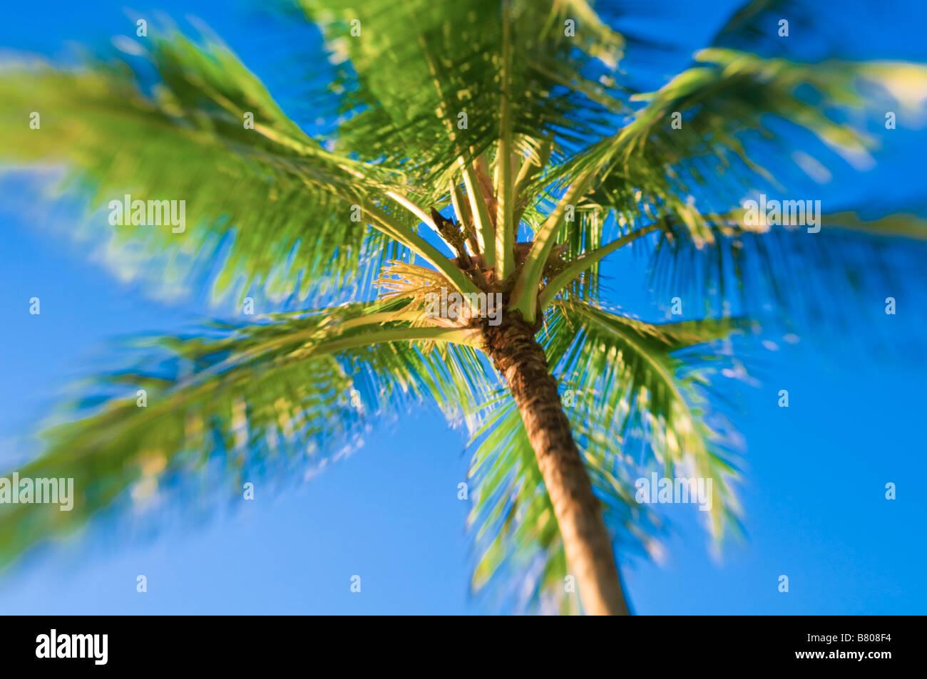 Coconut palm and blue sky Island of Kauai Hawaii - Stock Image