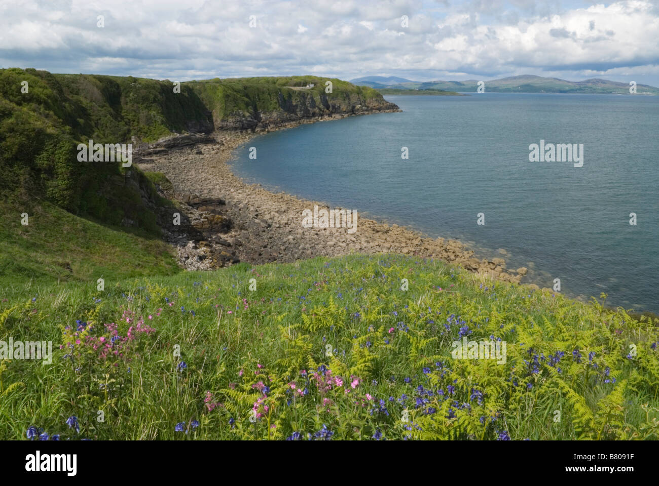 Bluebells and pink campion on Cruggleton Point and the view north Dumfries and Galloway Scotland May Stock Photo
