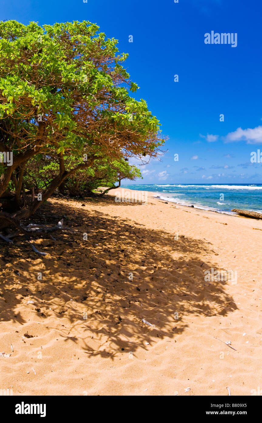 Larsens Beach North Shore Island of Kauai Hawaii - Stock Image