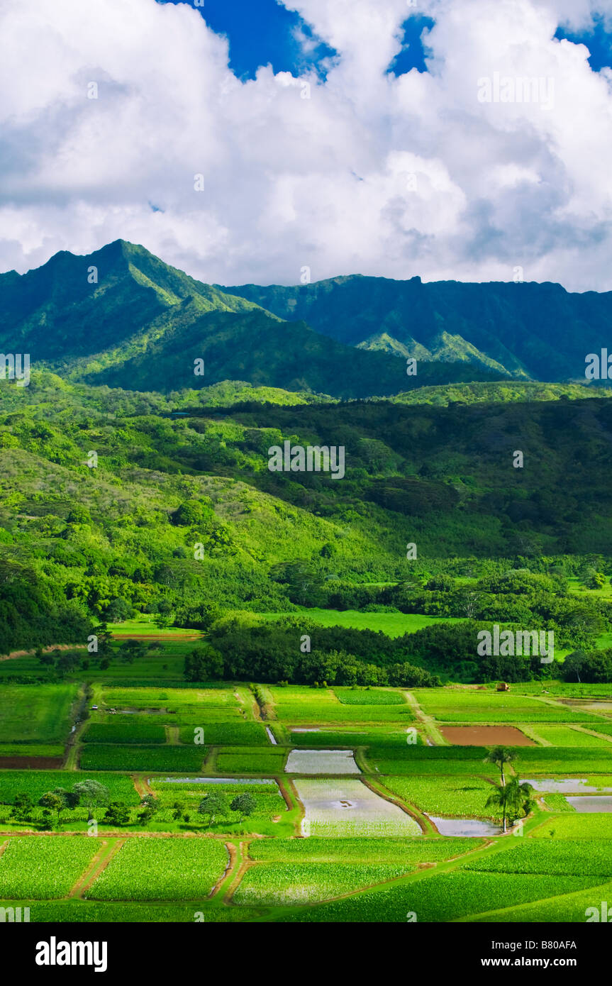 Taro fields in Hanalei Valley Island of Kauai Hawaii Stock Photo