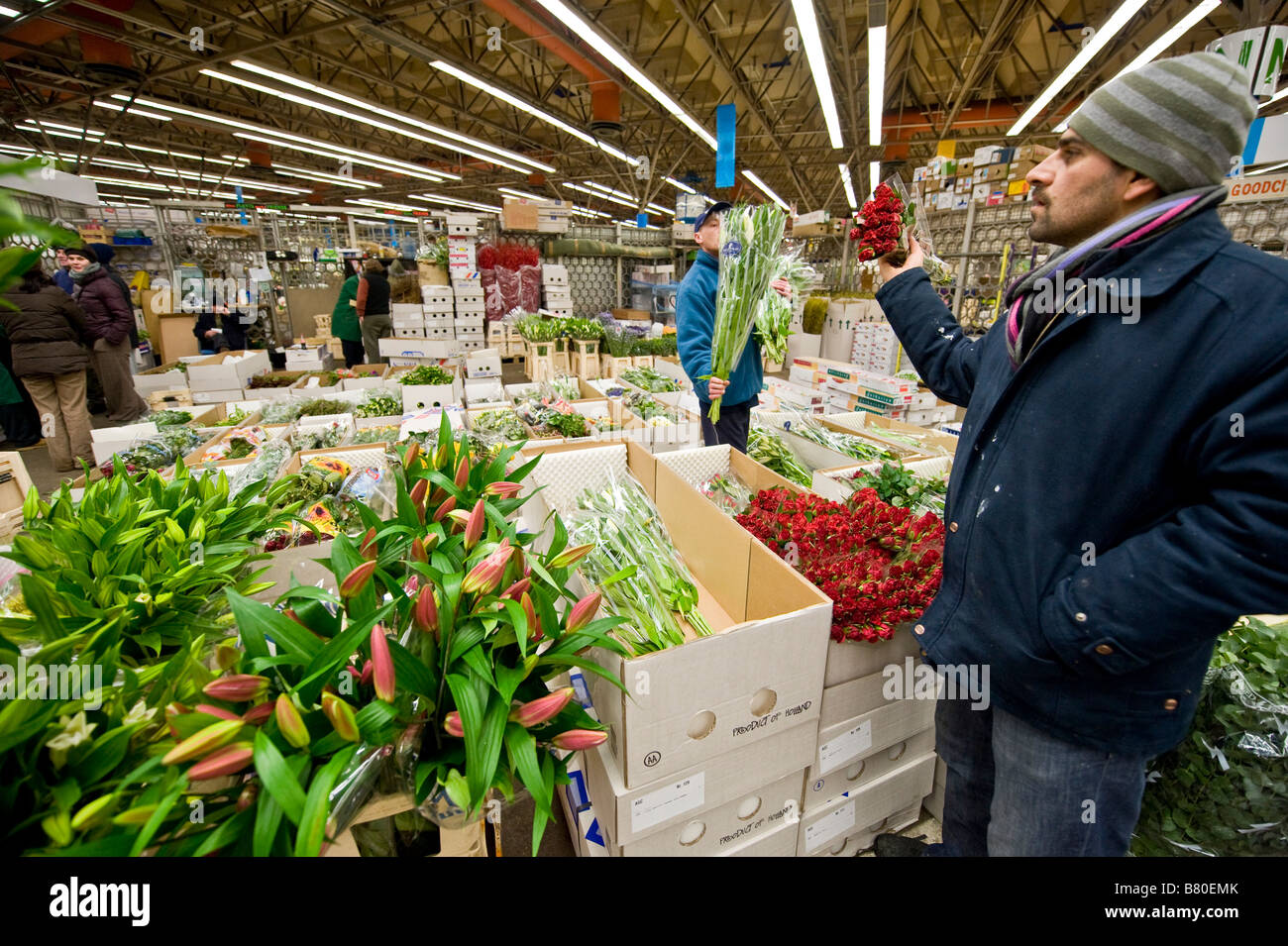 A man looks through a selection of flowers at London's New Covent Garden Flower Market London UK - Stock Image
