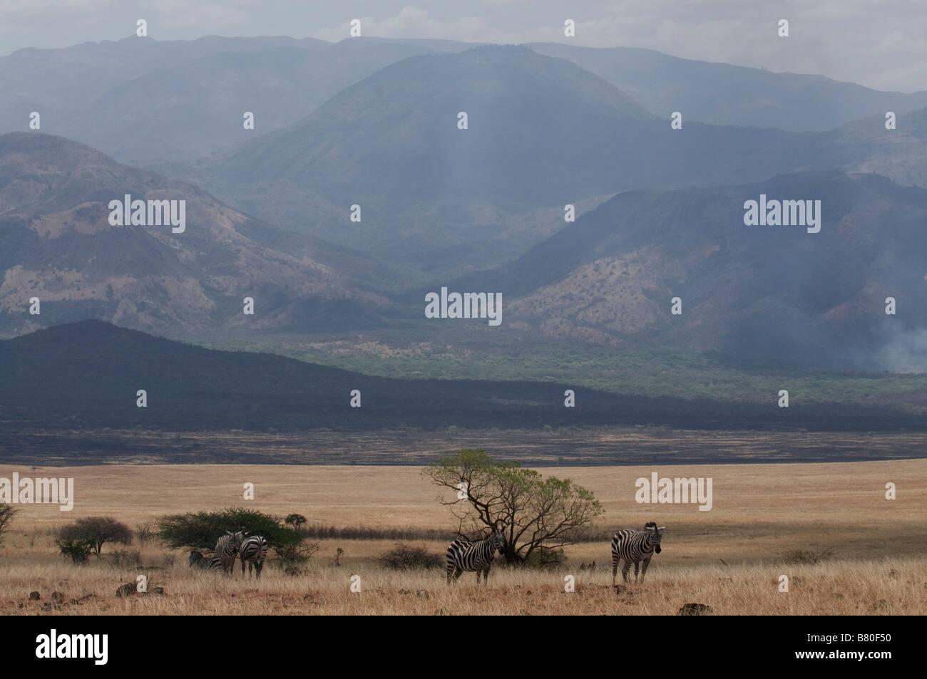 Wilderbeest in the Nechisar National Park Ethiopia Africa Stock Photo