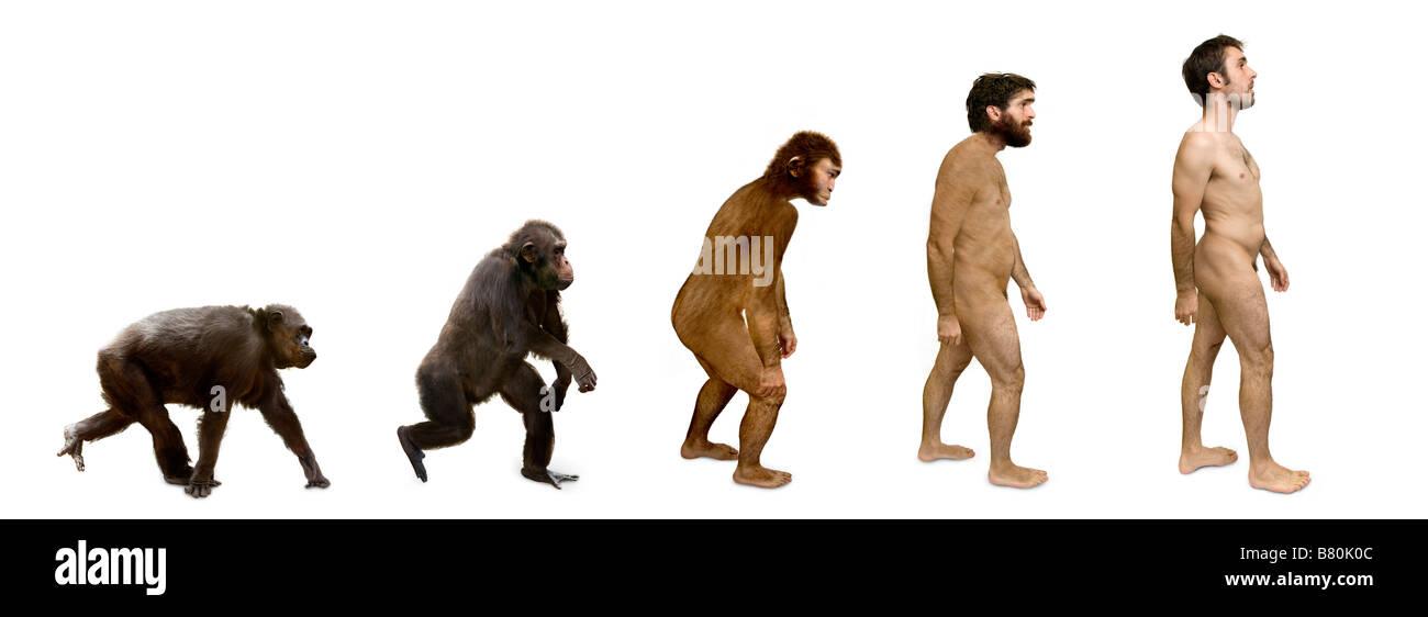Evolution of Man - Stock Image