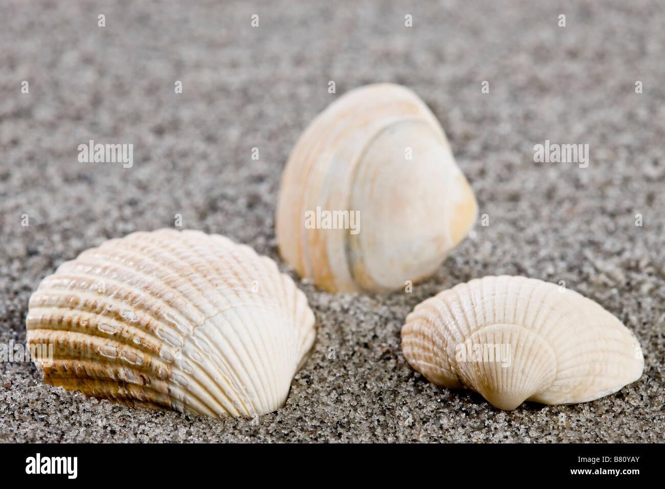 Shells on the beach - Stock Image