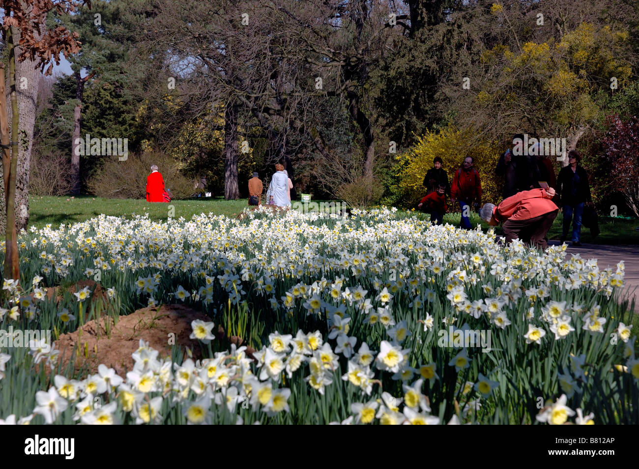 Paris, France, People among Narcissus flowers at bagatelle park in march Stock Photo