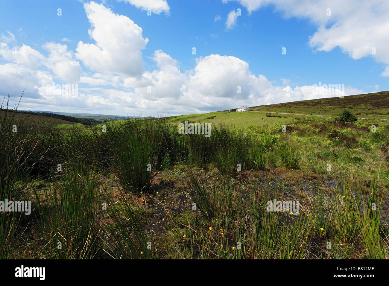 Warren House Inn on a hill Postbridge Dartmoor Devon England United Kingdom - Stock Image