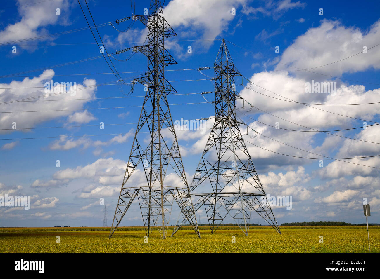 Hydro electric towers over a soya bean field - Stock Image