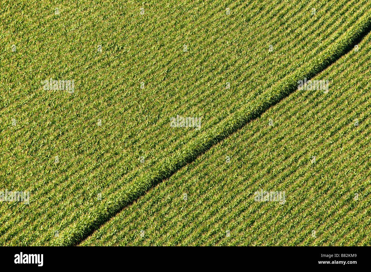 Corn fiel in Dordogne France - Stock Image