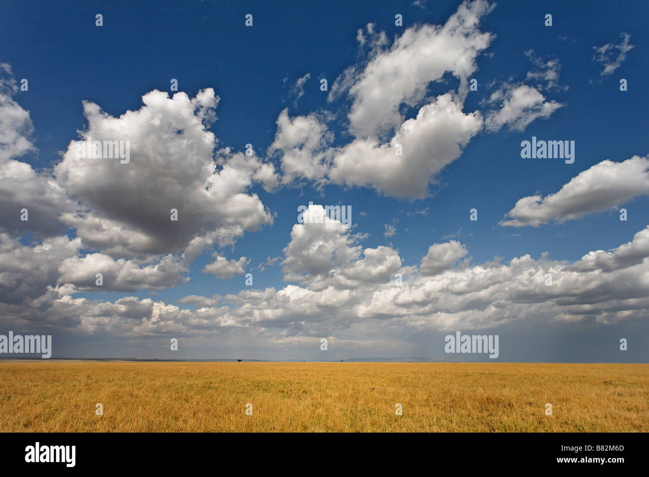 Beautiful clouds hang high above the wide open plains of the Serengeti in Serengeti national Park Tanzania. - Stock Image
