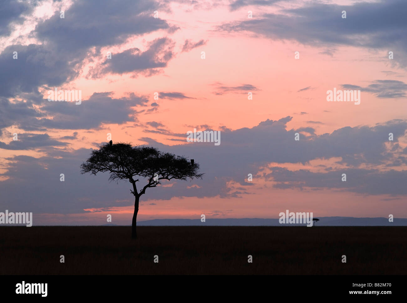 Beautiful sunrise over the vast Serengeti plains in the Masai Mara National Reserve, Kenya. - Stock Image