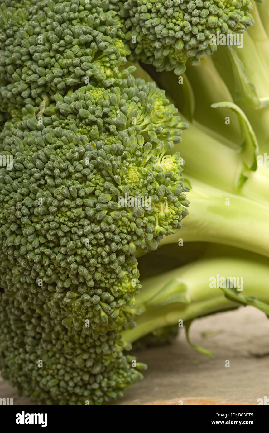 Close up of head of broccoli - Stock Image