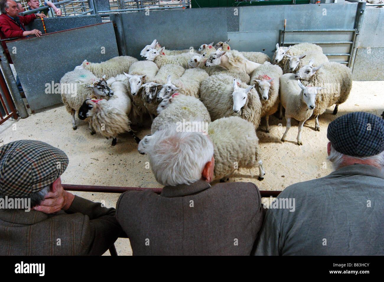 Skipton Auction Market Yorkshire Dales UK - Stock Image