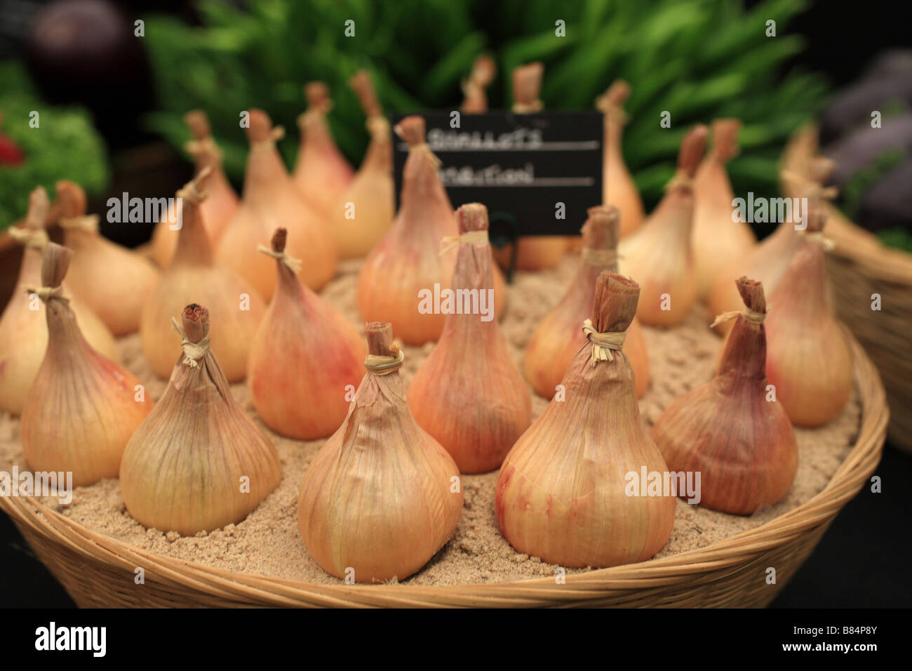 'Onion' set bulbs planted in a terracotta pot as part of a RHS vegetable display. Beautifully arranged for - Stock Image