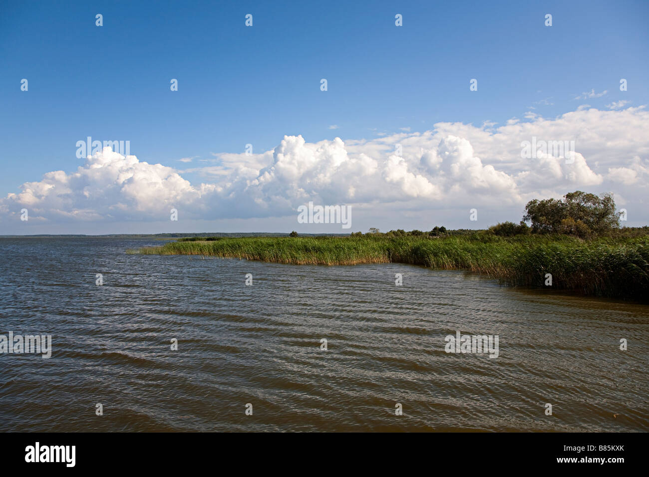 Reed beds around Jezioro Lebsko lake Slowinski national park Poland - Stock Image