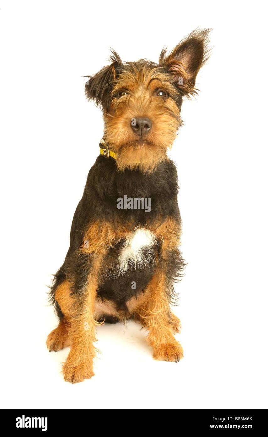 dog looking alert - Stock Image