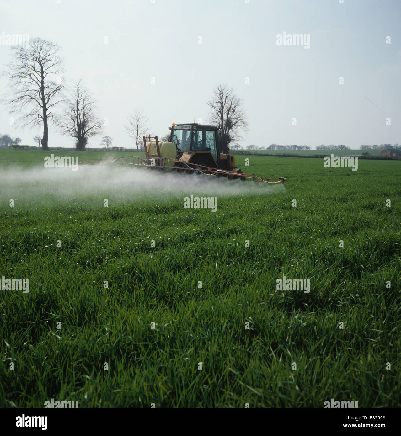 Spray sitting on the top of a young barley crop after tractor and trailer on a still morning - Stock Image