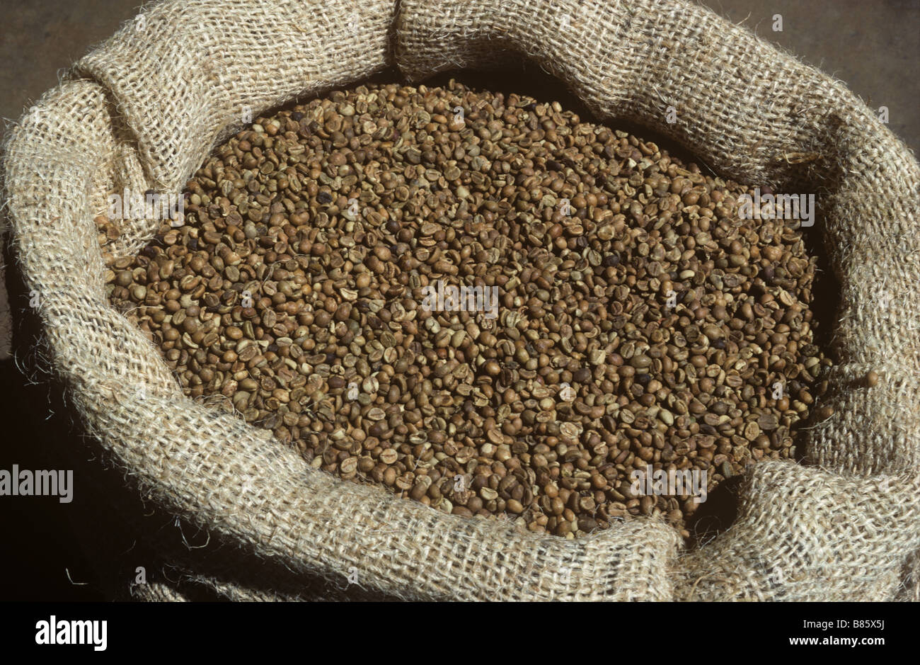 Dried fermented coffee beans in a sack ready for export Arusha Tanzania - Stock Image