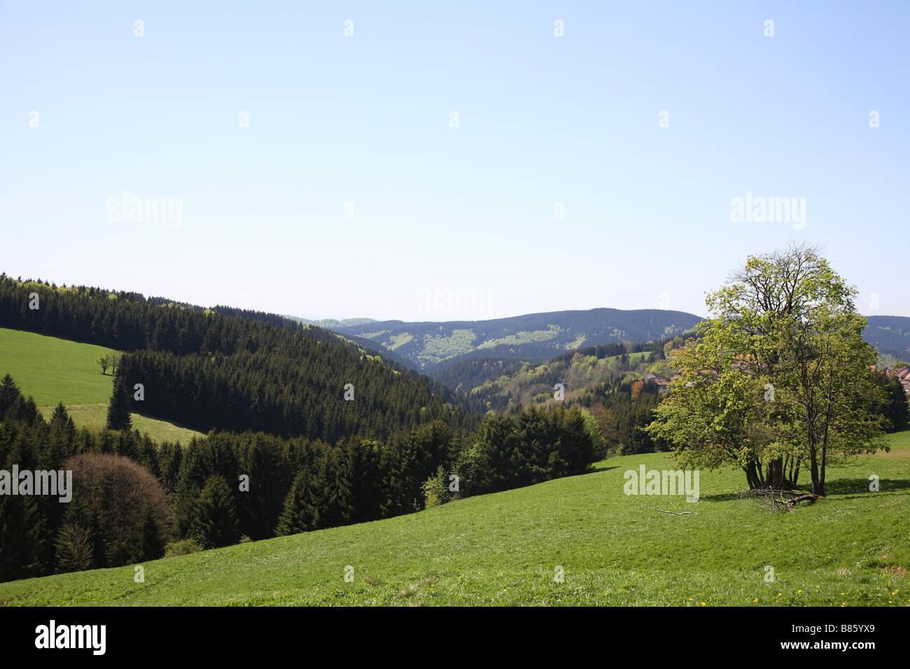 Harz Nationalpark National Park - Stock Image
