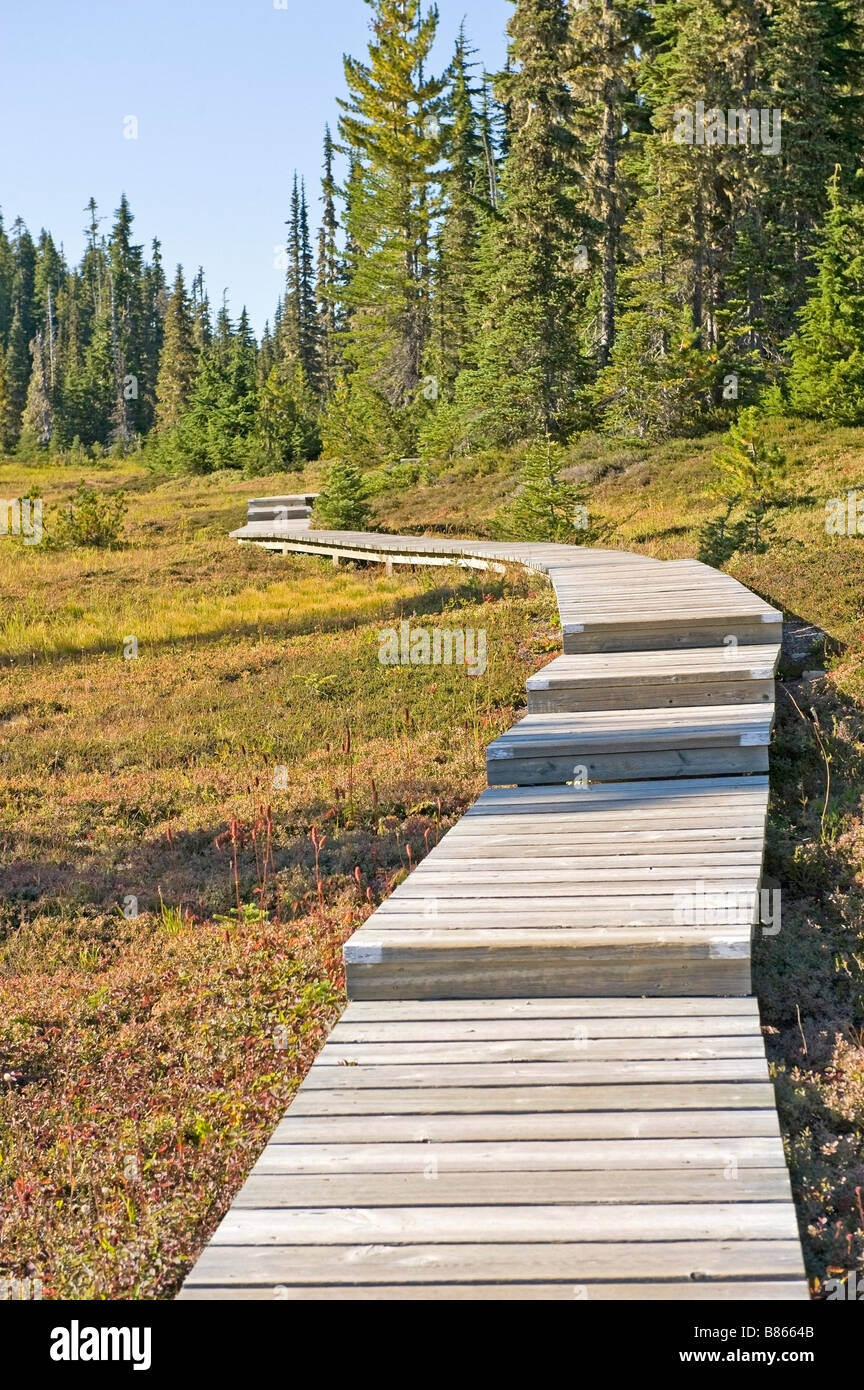 Boardwalk, Campbell River, British Columbia, Canada - Stock Image