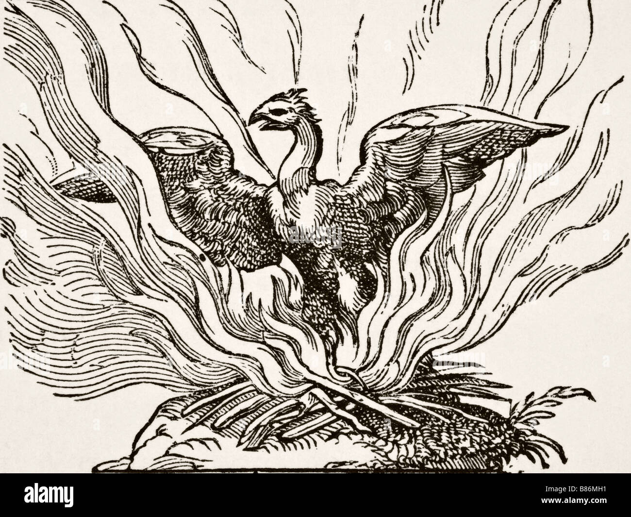 The Phoenix Rising From His Ashes Stock Photo 22275485 Alamy