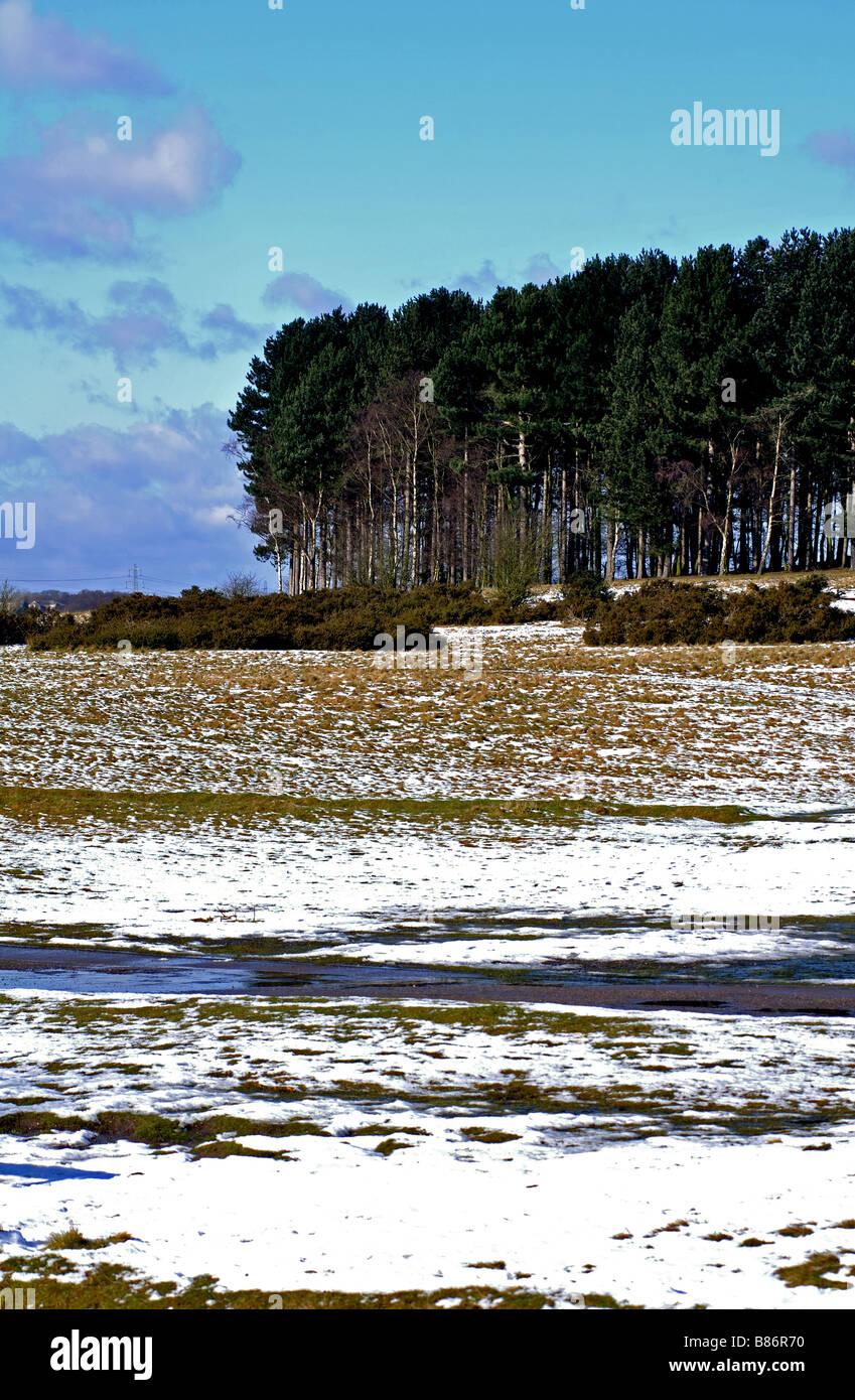 Sutton Park in winter, West Midlands, England, UK - Stock Image