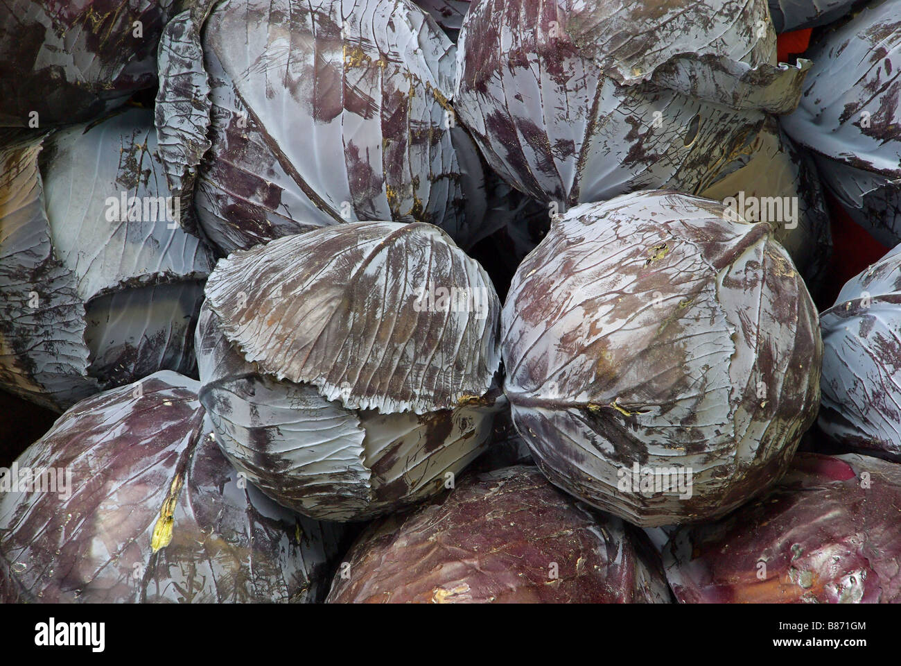 Rotkohl red cabbage 01 - Stock Image
