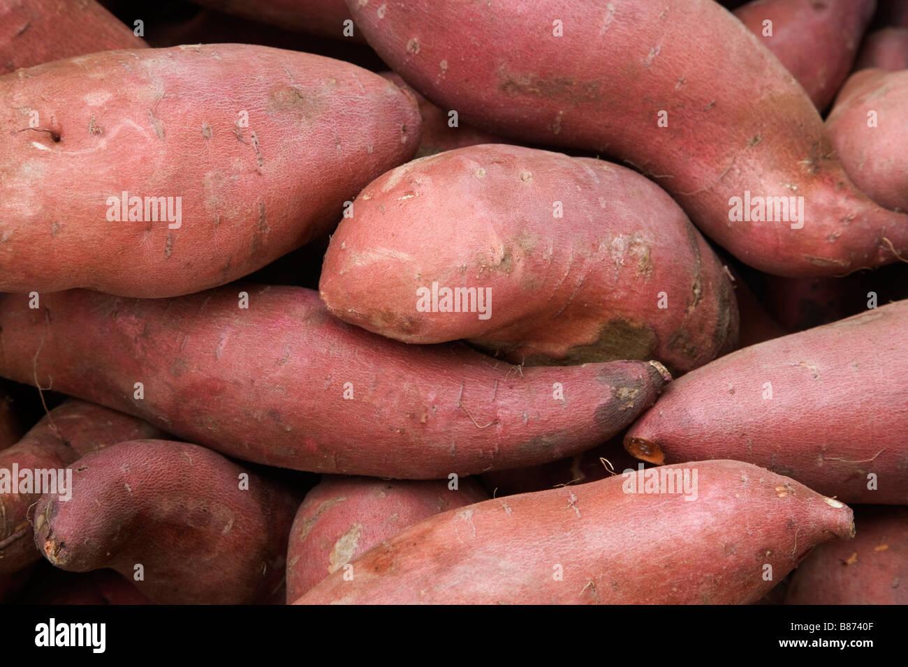 Harvested Yams 'Dioscorea'  species. - Stock Image