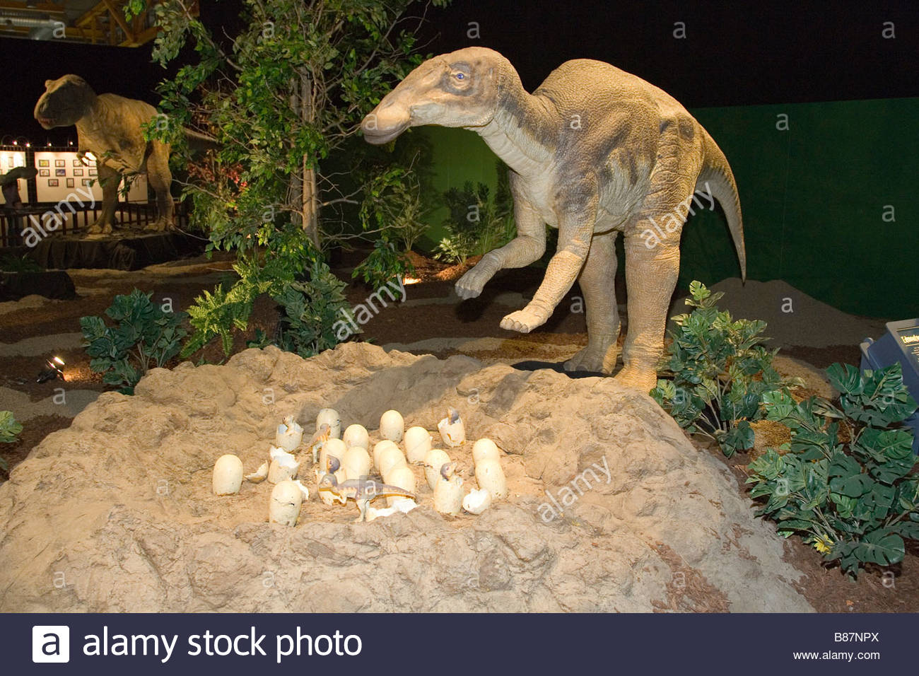 europe,italy,lombardia,cremona,exhibition of reproduction of dinosaurs,eggs of edmontosaur - Stock Image