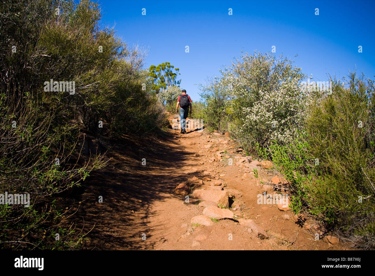 Hiker on the mishe mokwa and backbone trail Santa Monica mountains hiking - Stock Image