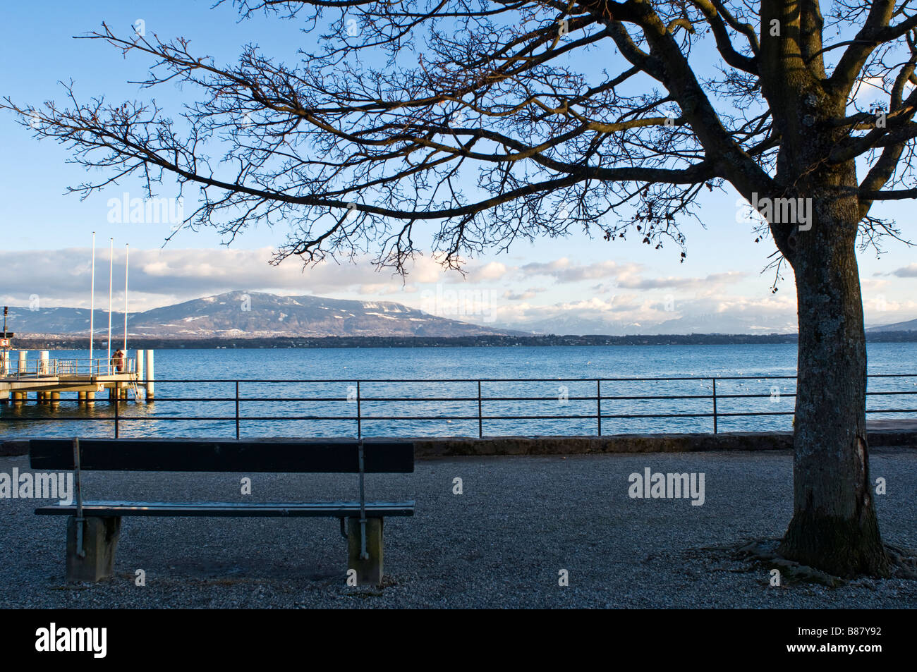 A bench and a tree by the lake leman ( Geneva Lake ) in Coppet, Switzerland - Stock Image