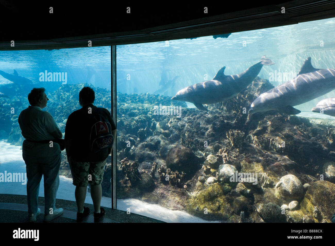 Underwater viewing area at Dolphin Cove, Sea World, Orlando, Central Florida, USA - Stock Image