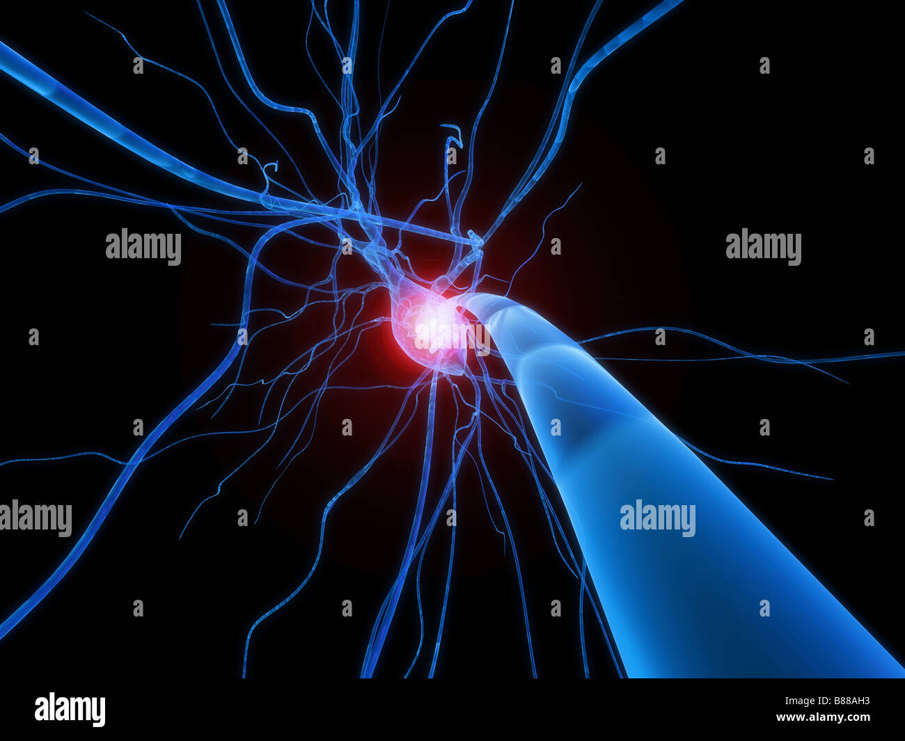 active nerve cell - Stock Image