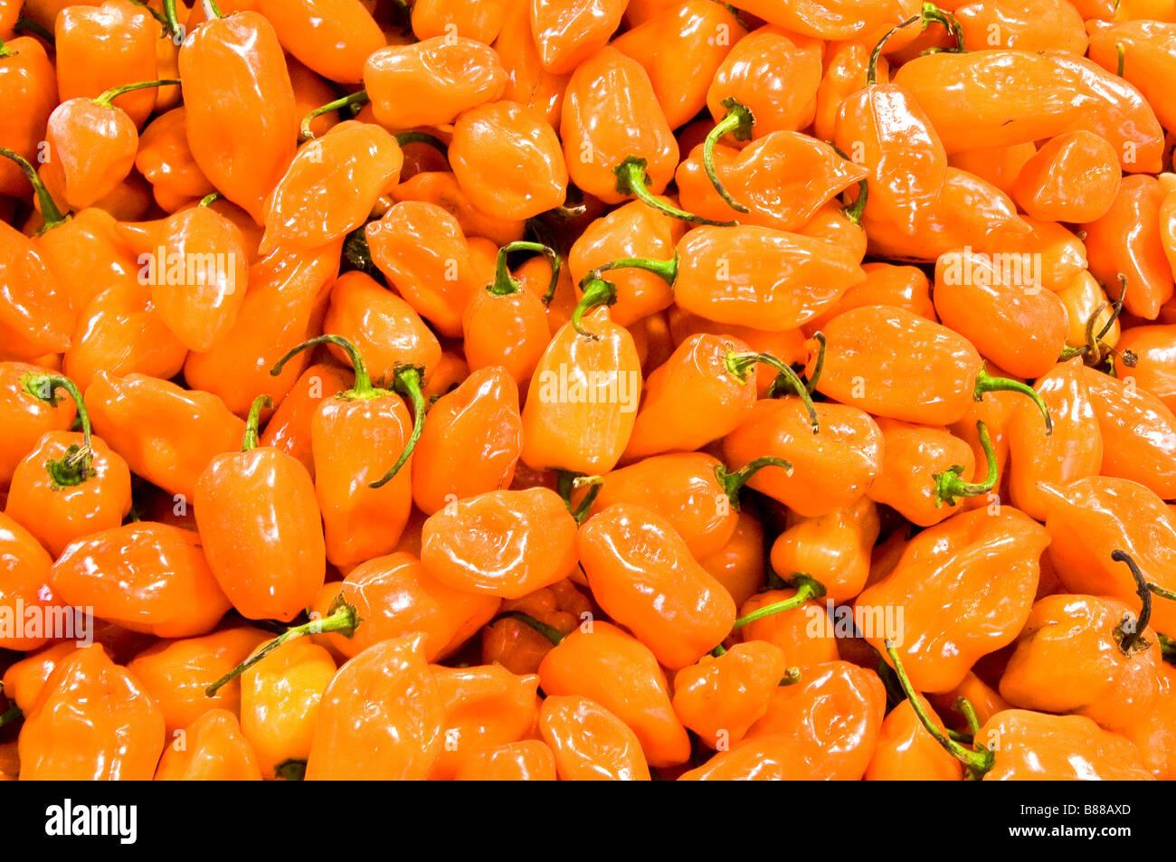 Habanero chiles at Mercado Pino Suarez Old Town Mazatlan Mexico - Stock Image