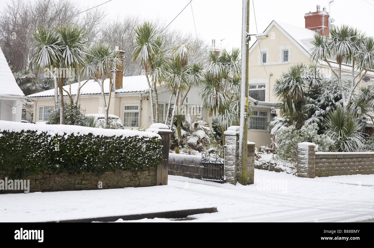 Beach Road Newton Porthcawl after a snowfall. The sub tropical plants on the right do not see this very often! - Stock Image