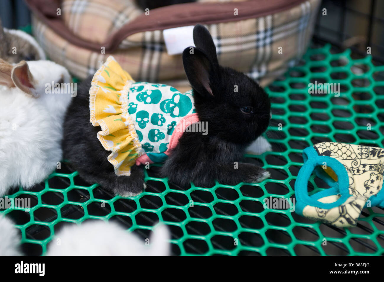 Rabbit with Dress at Chatuchak Weekend Market Bangkok - Stock Image