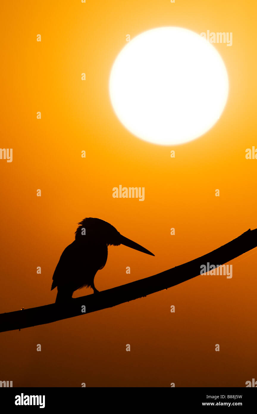 Silhouette of a kingfisher perched on a stick over a water well in the indian countryside at sunset. Andhra Pradesh, - Stock Image