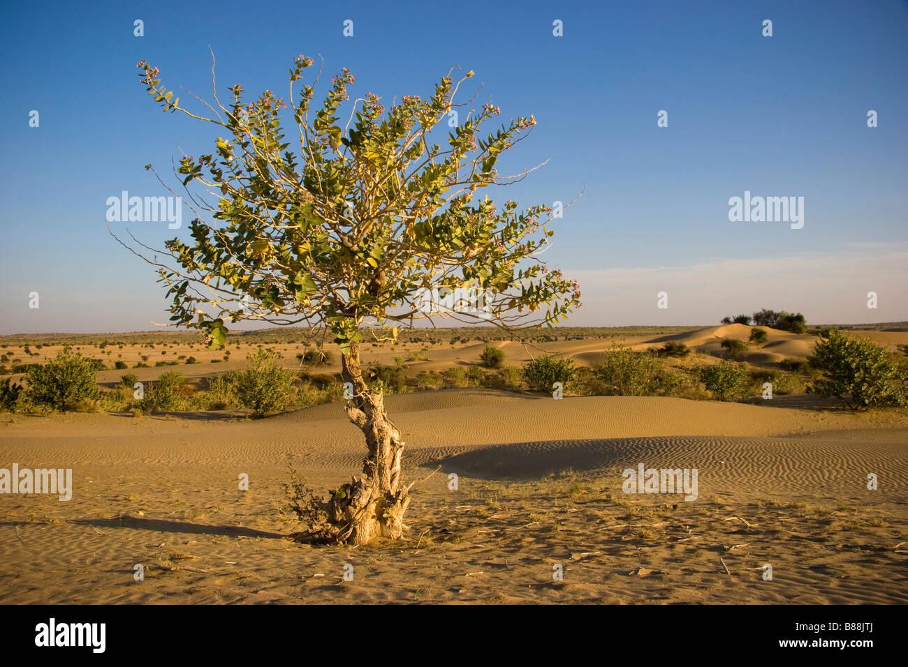 Khuri desert Rajasthan India - Stock Image