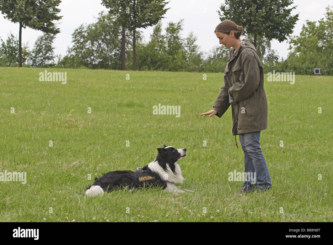 Woman training Border Collie to lay down and stay. Germany - Stock Image