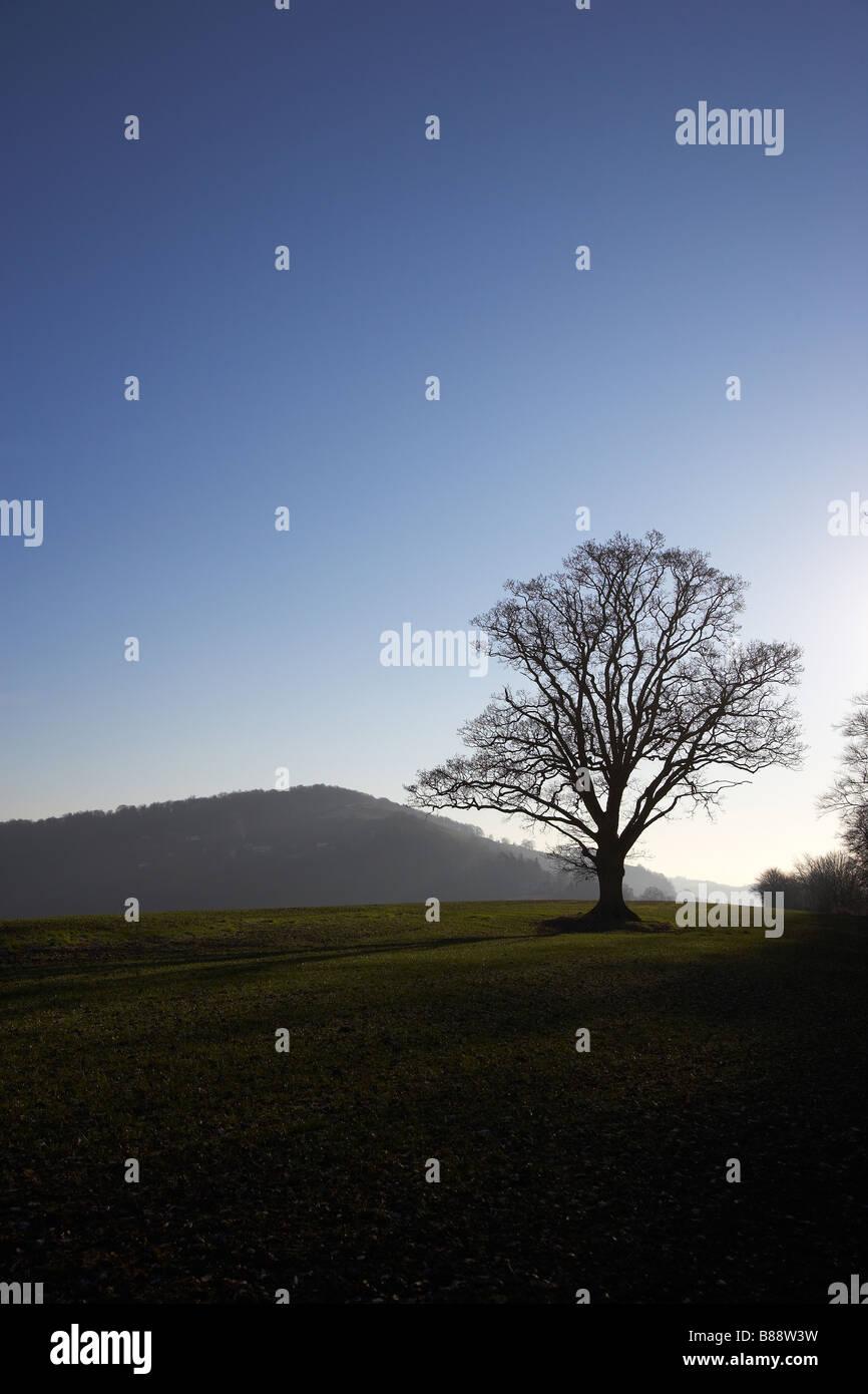 Oak Tree in Evening Sky near Goodrich Castle, Herefordshire, England, UK - Stock Image