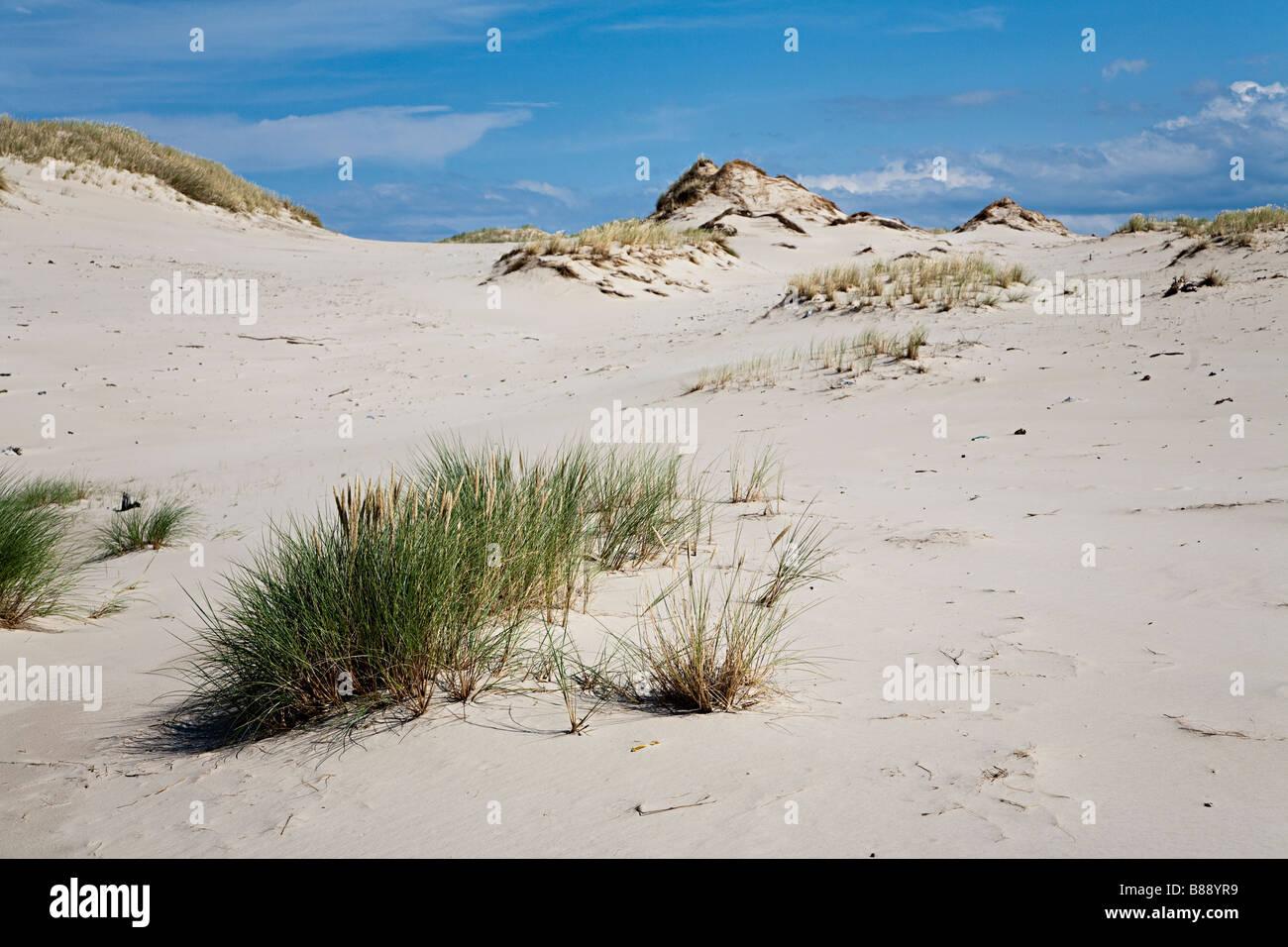 Area of blown out eroded sand dunes with marram grass Lacka Gora dunes Slowinski national park Leba Poland - Stock Image