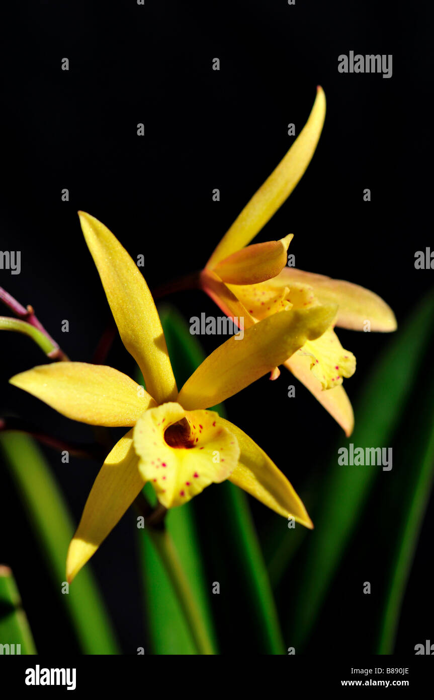 Orchid flowers. - Stock Image