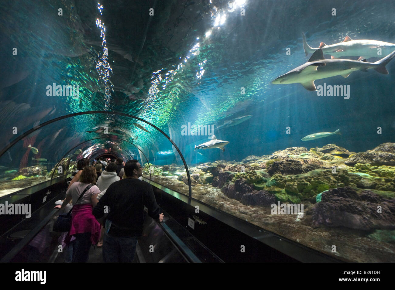 Underwater viewing tunnel at the Shark Encounter, Sea World, Orlando, Central Florida, USA - Stock Image