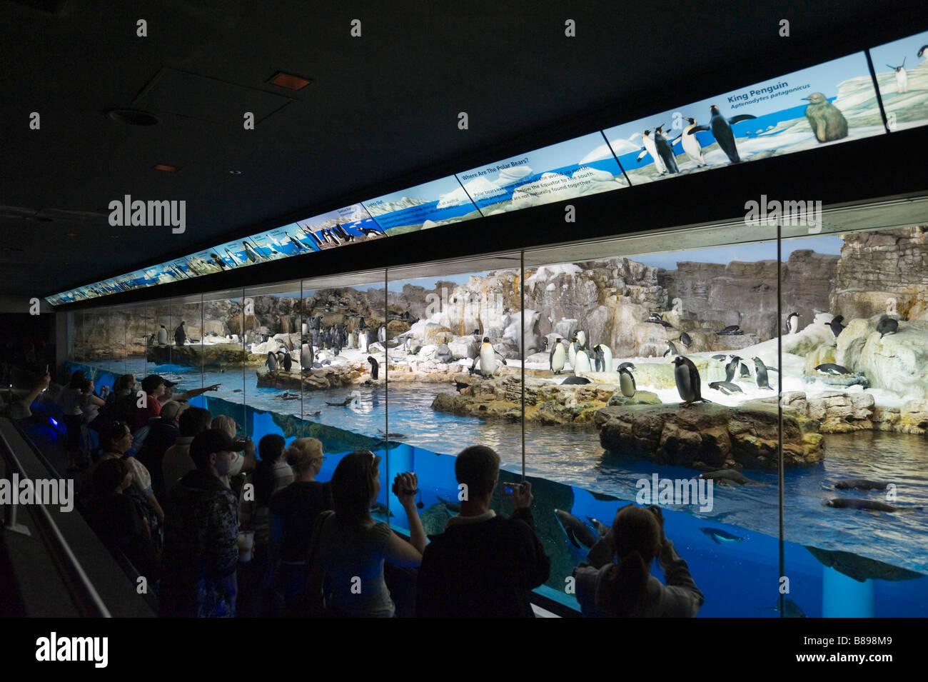 Viewing area at the Penguin Encounter, Sea World, Orlando, Central Florida, USA - Stock Image