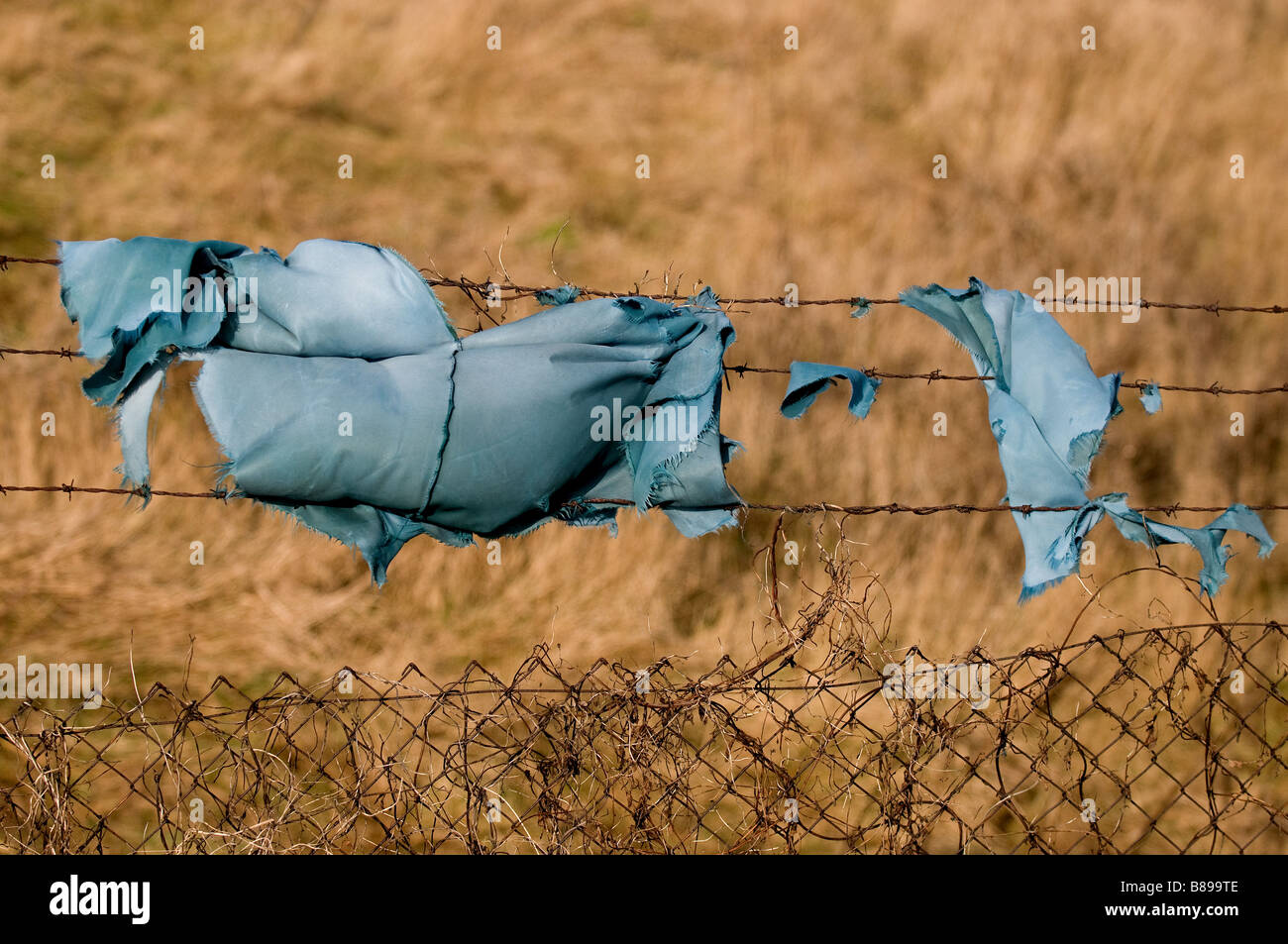A fragment of blue cloth hanging on a barbed wire fence. - Stock Image