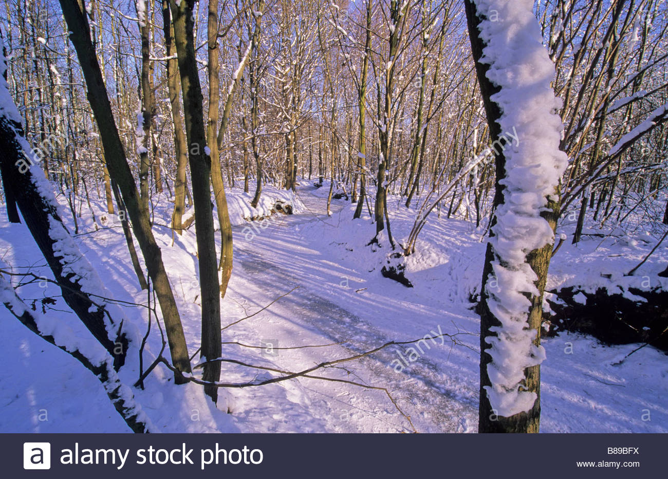 winter landscape forest river Germany Winterwald - Stock Image
