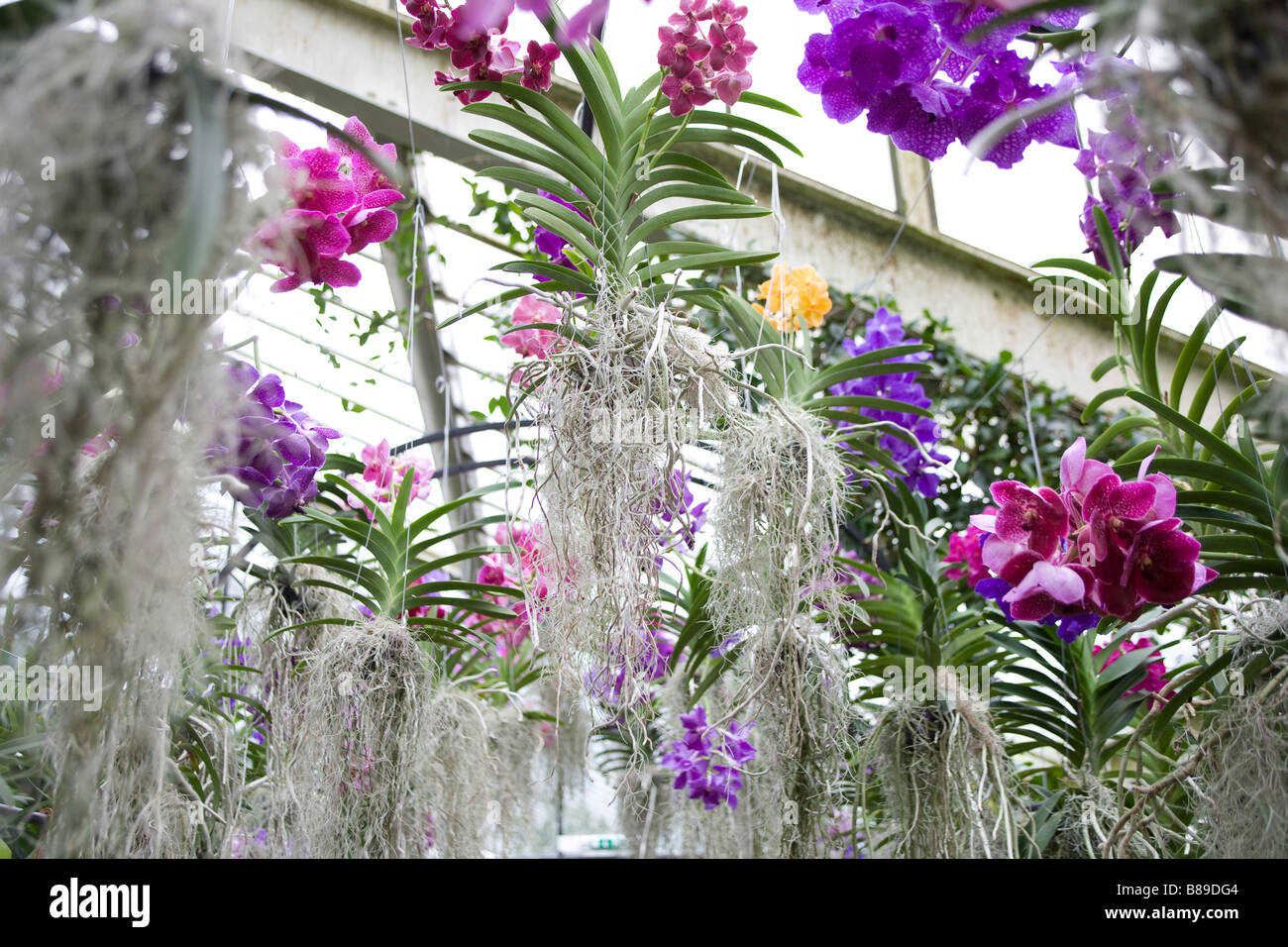250 anniversary of Kew Gardens.Inside the Princess of Wales Conservatory exhibiting tropical plants and orchids - Stock Image