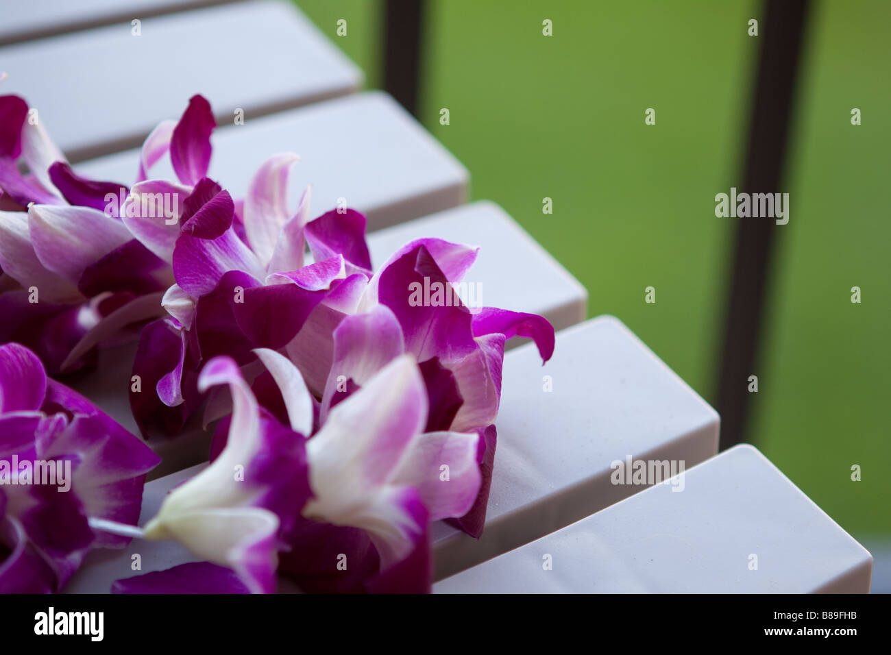 Hawaiian lei stock photos hawaiian lei stock images alamy hawaiian lei stock image izmirmasajfo
