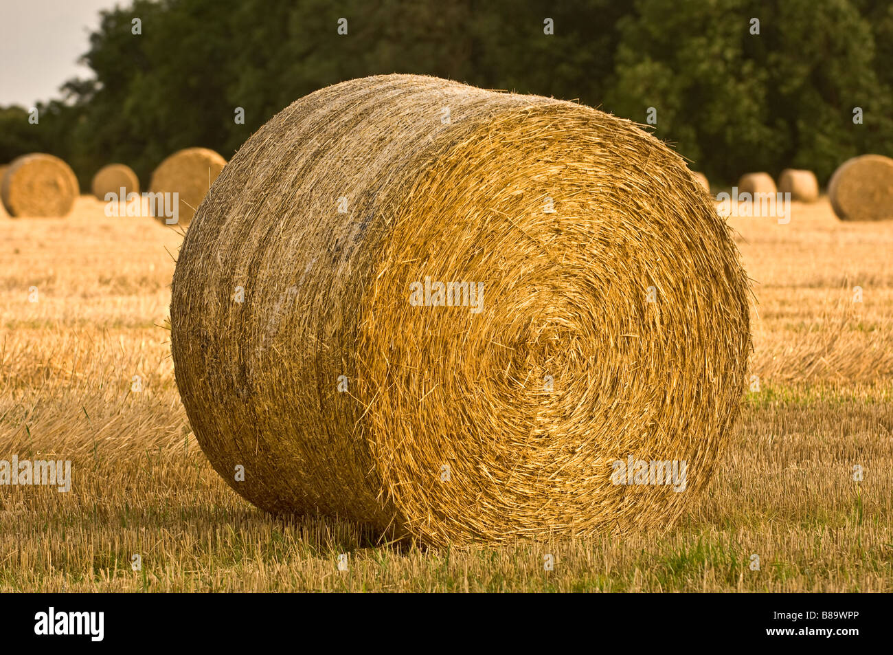 Hay bale in harvested field - Stock Image